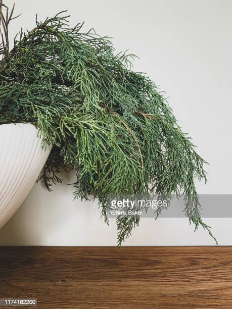 pine arrangment in vase - emma baker stock pictures, royalty-free photos & images
