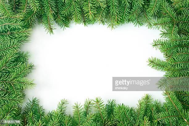 Pine branche de