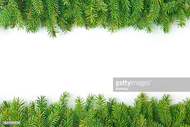 pine branch - lush foliage stock pictures, royalty-free photos & images