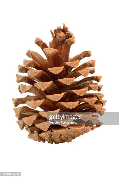 pine cone isolated on white background - cone shaped objects stock pictures, royalty-free photos & images