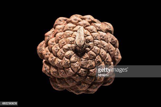 Pine Cone on Black Background