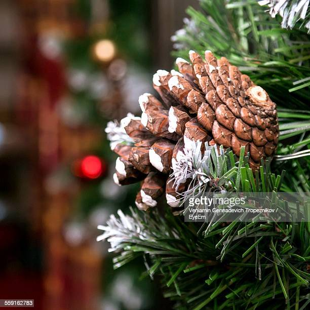 Pine Cone On Christmas Tree At Home