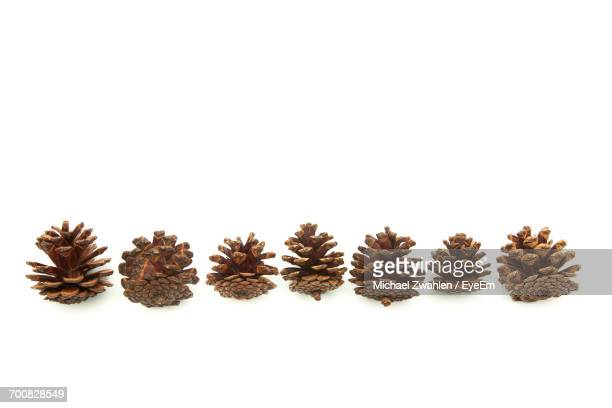 pine cones against white background - pinecone stock pictures, royalty-free photos & images