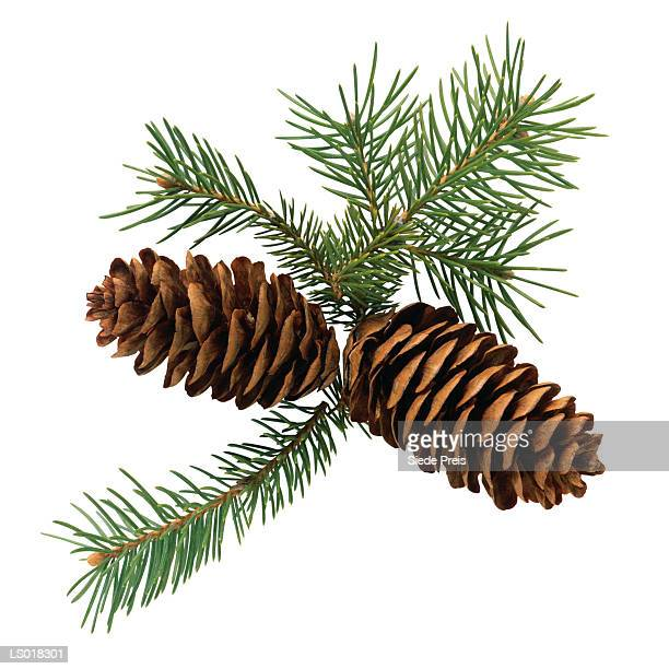 Pine Cones and Sprigs