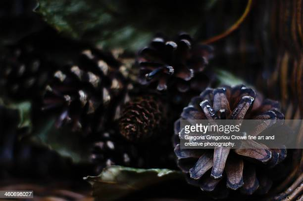 pine cones in a basket - gregoria gregoriou crowe fine art and creative photography stock photos and pictures