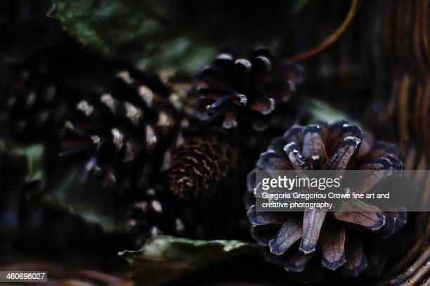 pine cones in a basket - gregoria gregoriou crowe fine art and creative photography - fotografias e filmes do acervo