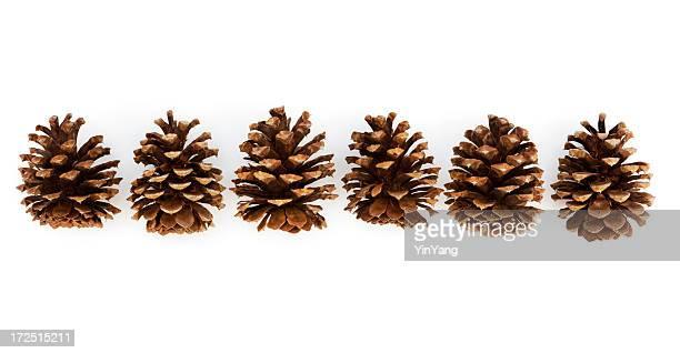 Pine Cones in Row