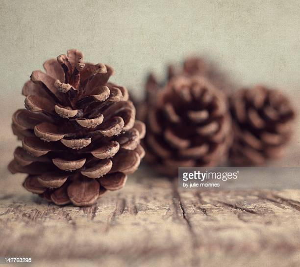 Pine cones on table