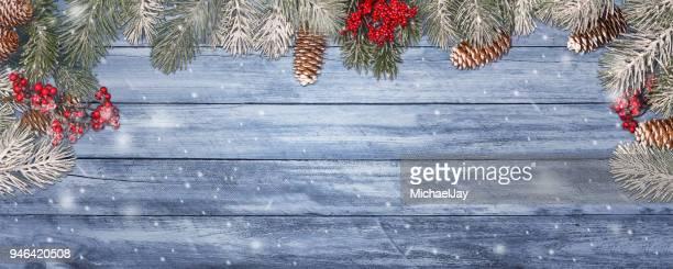 Pine Cones On Tree