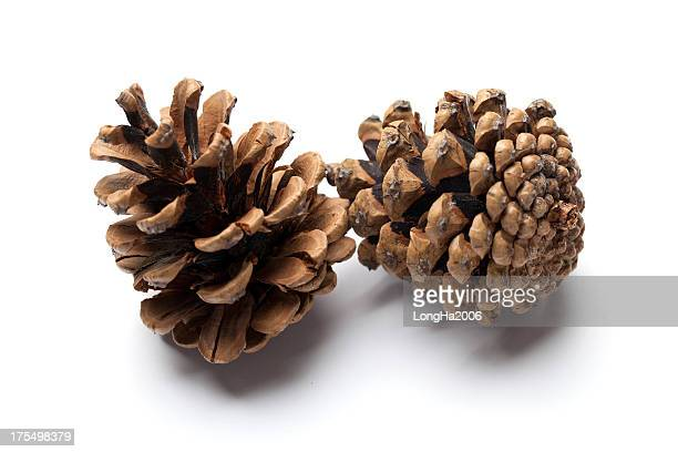 pine cones - cone shaped objects stock pictures, royalty-free photos & images