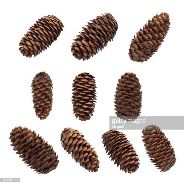 pine cones set - herbst winter kollektion stock-fotos und bilder