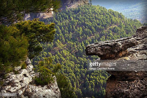 Pine forest and rock formations
