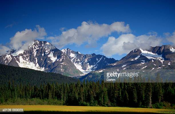Pine Forest below Mountains