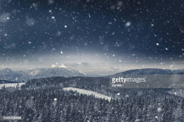 pine forest covered with snow - blizzard stock pictures, royalty-free photos & images