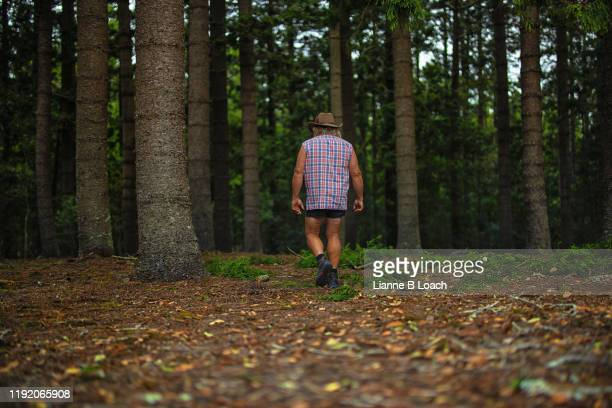 pine forest - lianne loach stock pictures, royalty-free photos & images