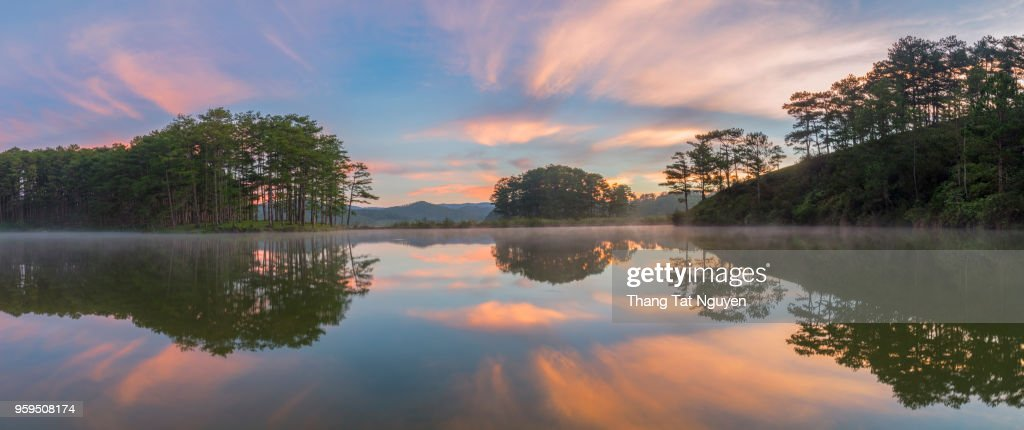 Pine forest reflection in lake at dawn : Stock-Foto