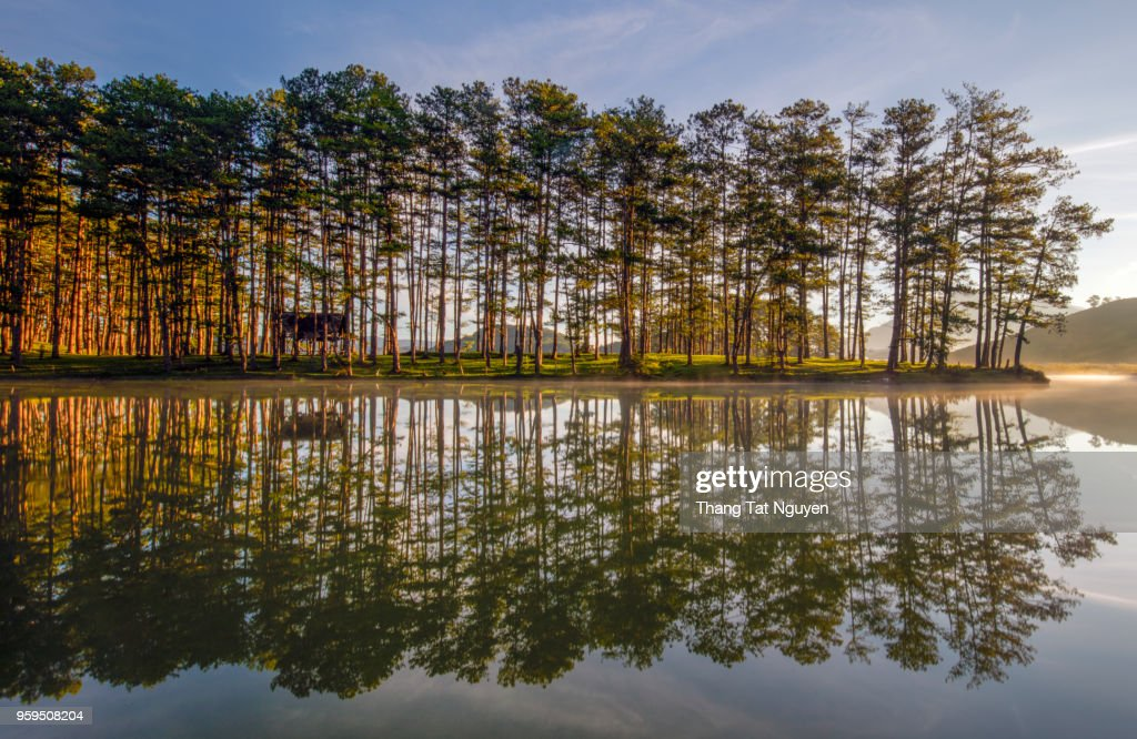 Pine forest reflection in lake  in morning sunlight : Stock-Foto