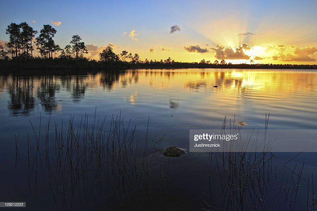 Pine Glades Lake Sunset : Stock Photo