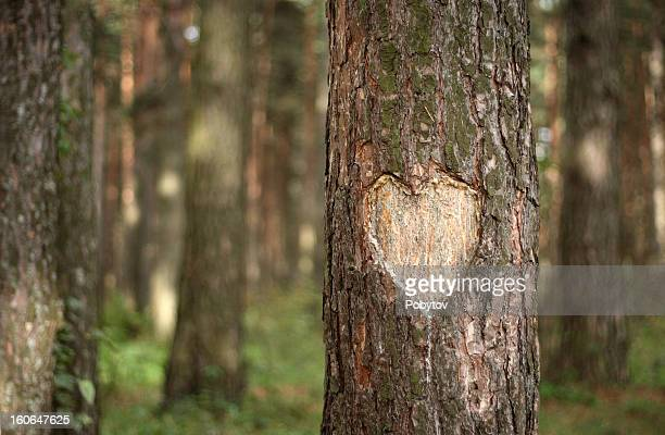 pine heart - love you stock photos and pictures