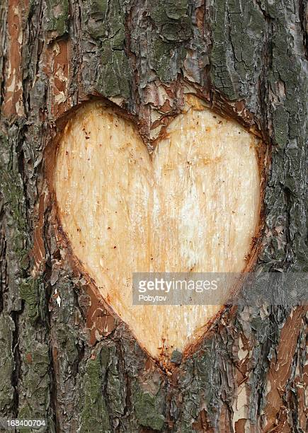 pine heart - tree trunk stock photos and pictures