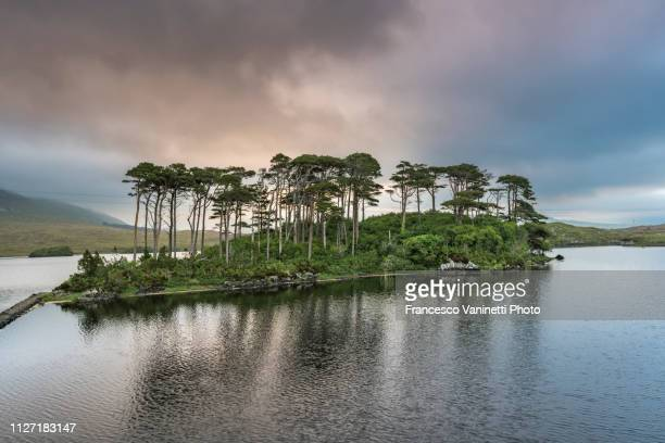 pine island on derryclare lake - county galway stock pictures, royalty-free photos & images