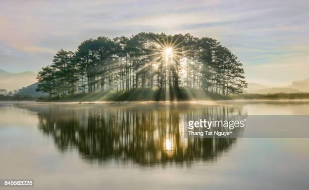 Pine island sunray