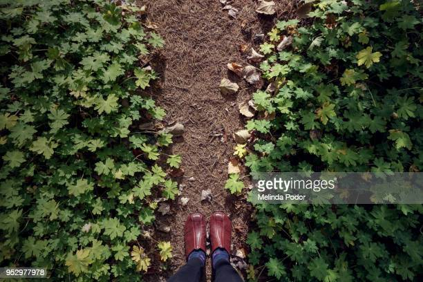 pine needle mulched path framed by big-foot geranium - brown shoe stock pictures, royalty-free photos & images