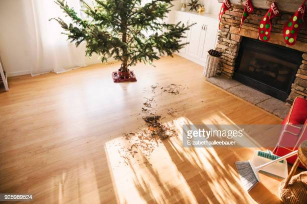 Pine needles on living room floor after setting up a Christmas tree