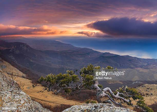 pine on a cliff in the mountains - anton petrus panorama of beautiful sunrise stock pictures, royalty-free photos & images