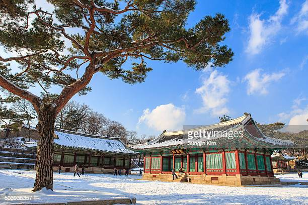 CONTENT] A pine tree and Changgyeonggung Palace covered with snow Seoul Korea