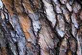 https://www.istockphoto.com/photo/seamless-bark-tree-texture-gm1061285330-283703426