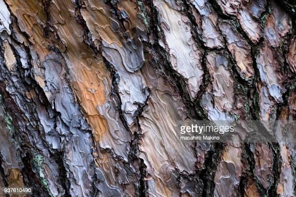 pine tree bark - tronc d'arbre photos et images de collection