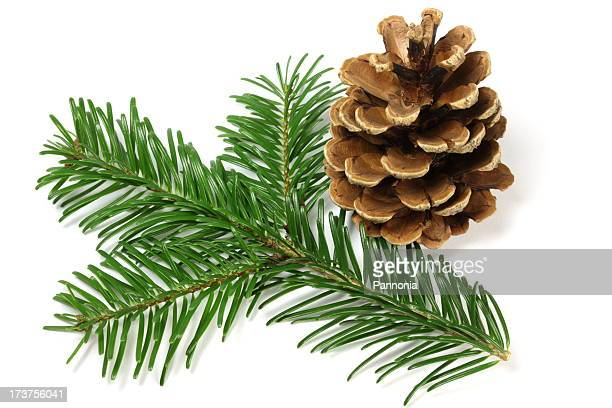 pine tree branch and cone - needle plant part stock photos and pictures