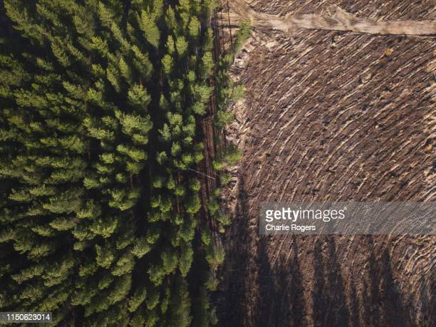 pine tree forest deforestation from above. - deforestation stock pictures, royalty-free photos & images