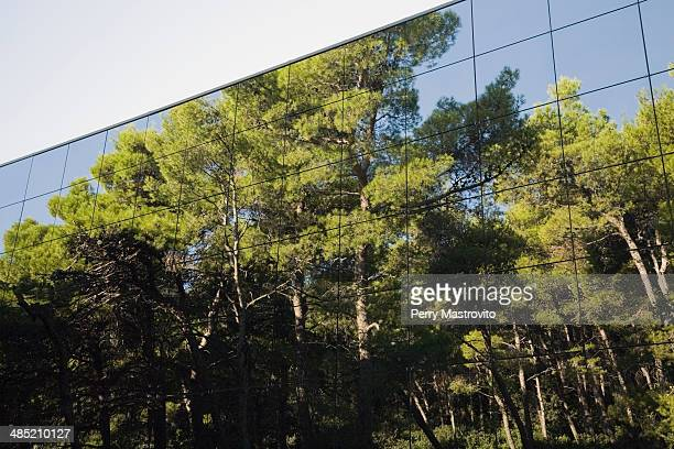 Pine tree forest reflected in modern glass clad building