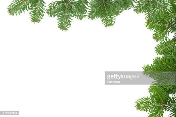 pinheiro moldura - agulha parte de planta imagens e fotografias de stock