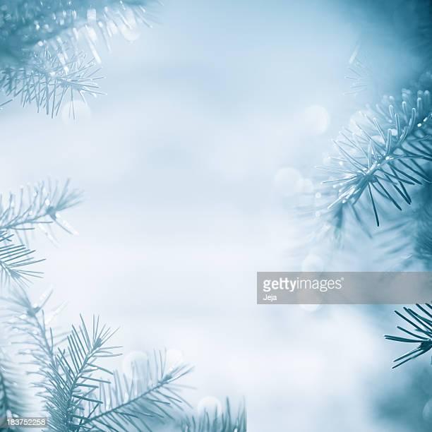 Pine tree marco