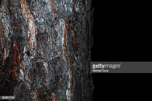 pine tree on black background