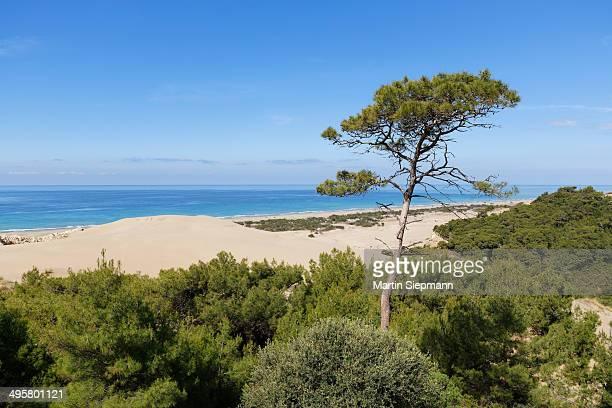 Pine tree on sand dunes, Lycian coast, Gelemis, Mediterranean Region, Turkey