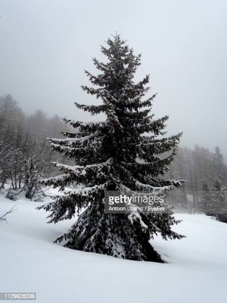 pine tree on snow covered field against sky - deep snow stock pictures, royalty-free photos & images