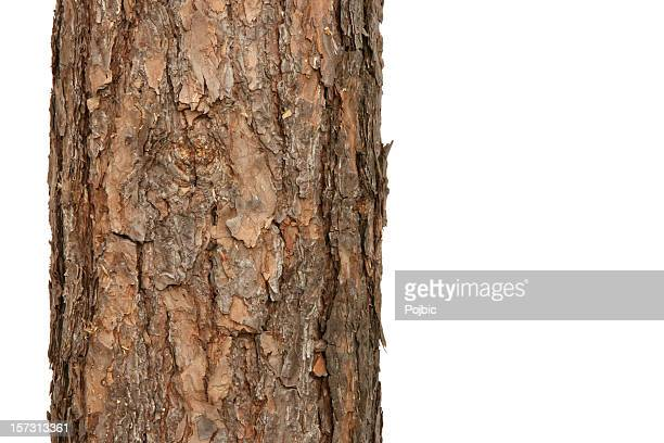 pine tree - tree trunk stock pictures, royalty-free photos & images