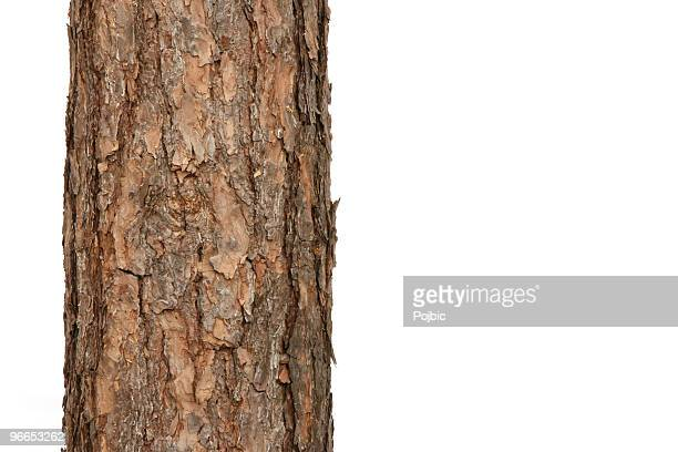 pine tree - log stock pictures, royalty-free photos & images