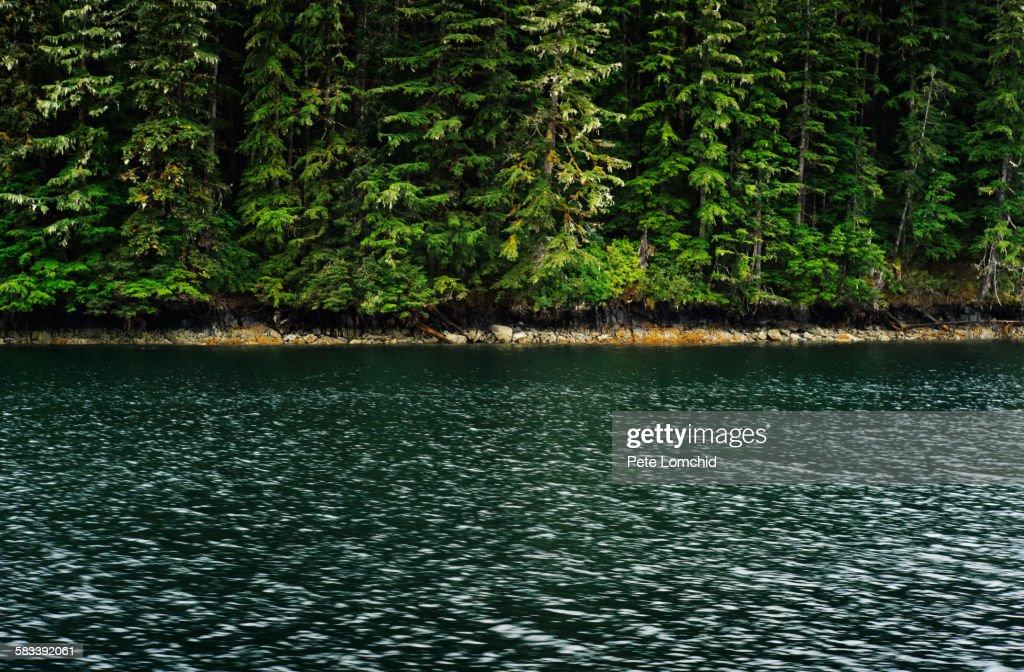 Pine tree reflect to ocean : Stock Photo