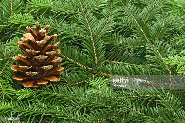 Pine Tree Setting