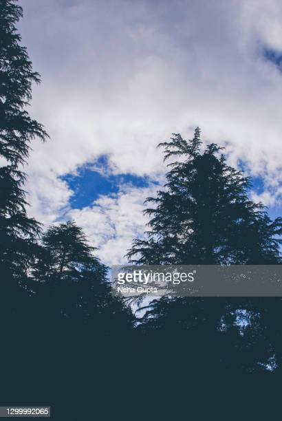 pine tree silhouette - cloudy sky - neha gupta stock pictures, royalty-free photos & images
