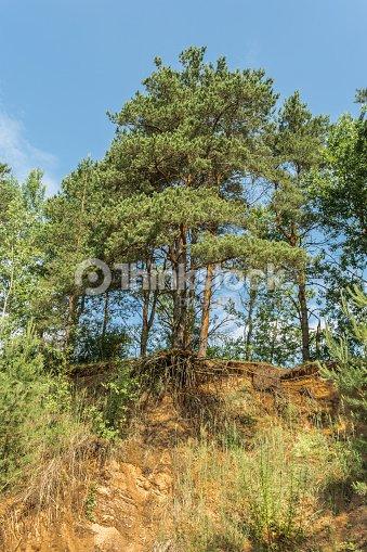 Pine Hollow Series