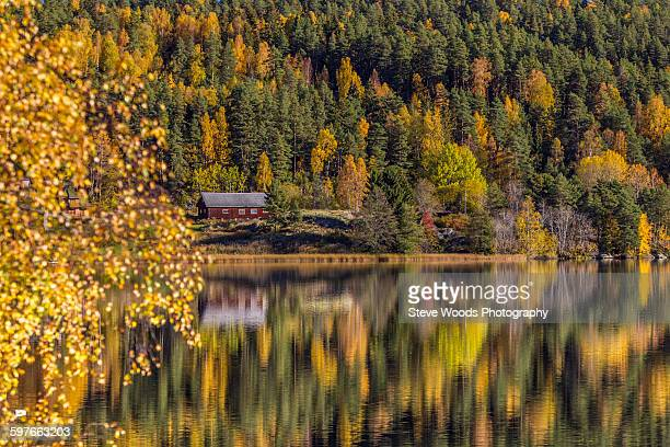 Pine trees and cabin reflecting in lake, Kolbotn, Norway