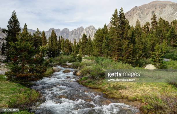 Pine Trees and Rock Creek
