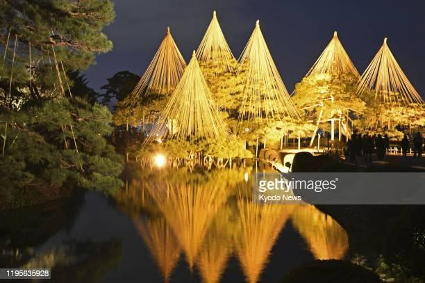 Pine trees are lit up at Kenrokuen, one of Japan's three best landscape gardens, on Jan. 24 in Kanazawa, Ishikawa Prefecture.