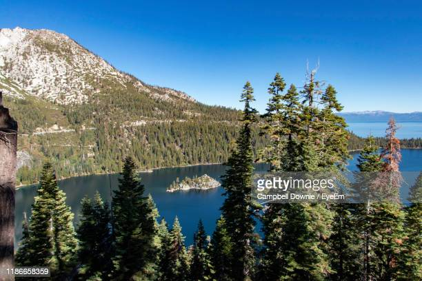 pine trees by lake against sky - campbell downie stock pictures, royalty-free photos & images